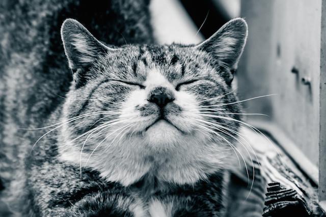 iqos_cat